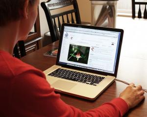 Adakah Kerja Online Yang Membayar