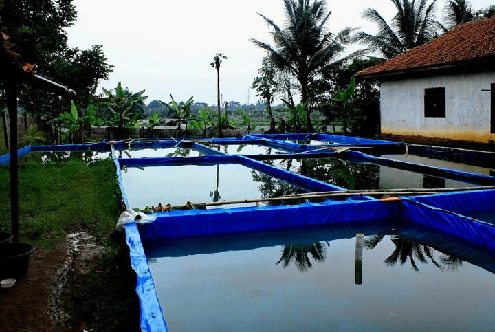 Usaha-Sampingan-Budidaya-Ikan-Lele-Bagi-Pemula