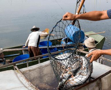 Usaha Sampingan Budidaya Ikan Patin dengan Modal Kecil